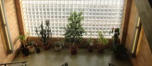 Small Spaces Garden Design, Melbourne