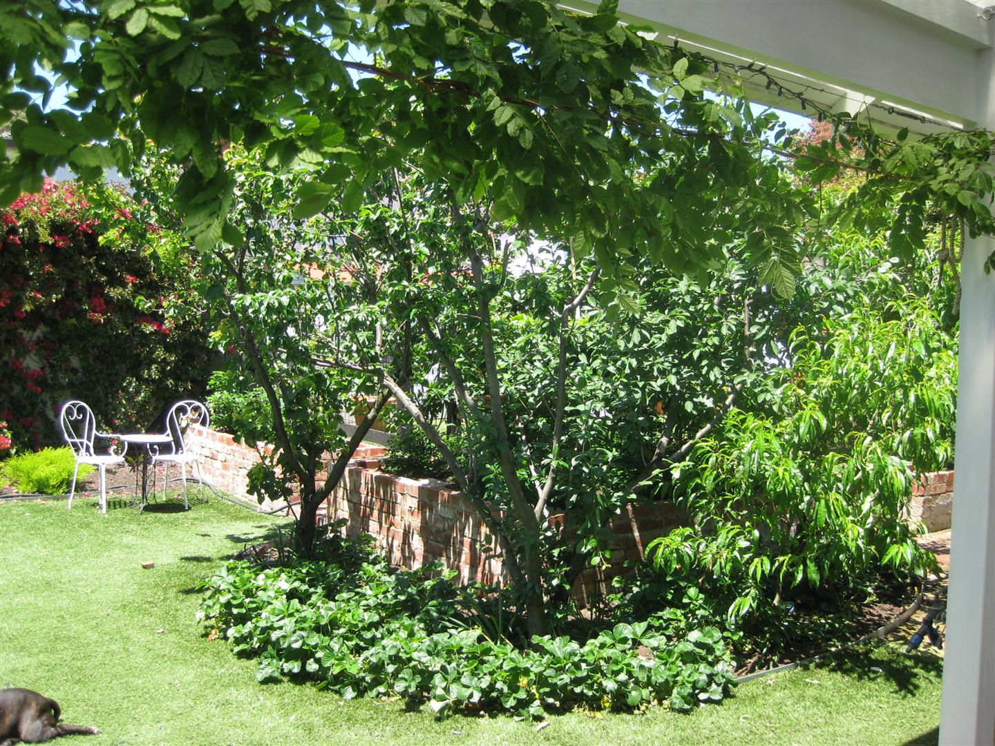 fruit trees and strawberry patch