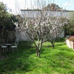 Fruit Trees in back garden before work started