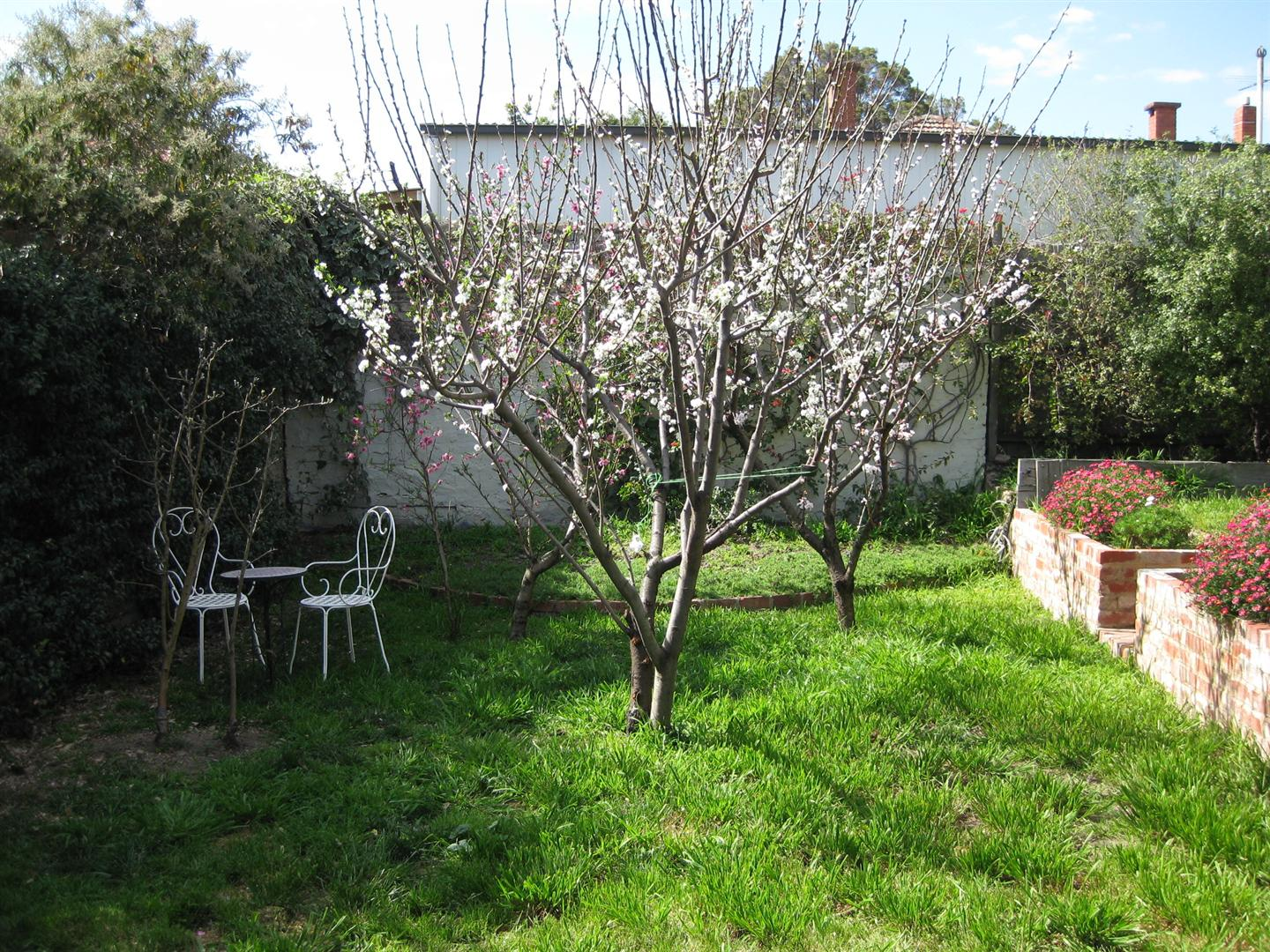 Revisiting a child dog friendly back garden small - Fruit trees in small spaces decoration ...