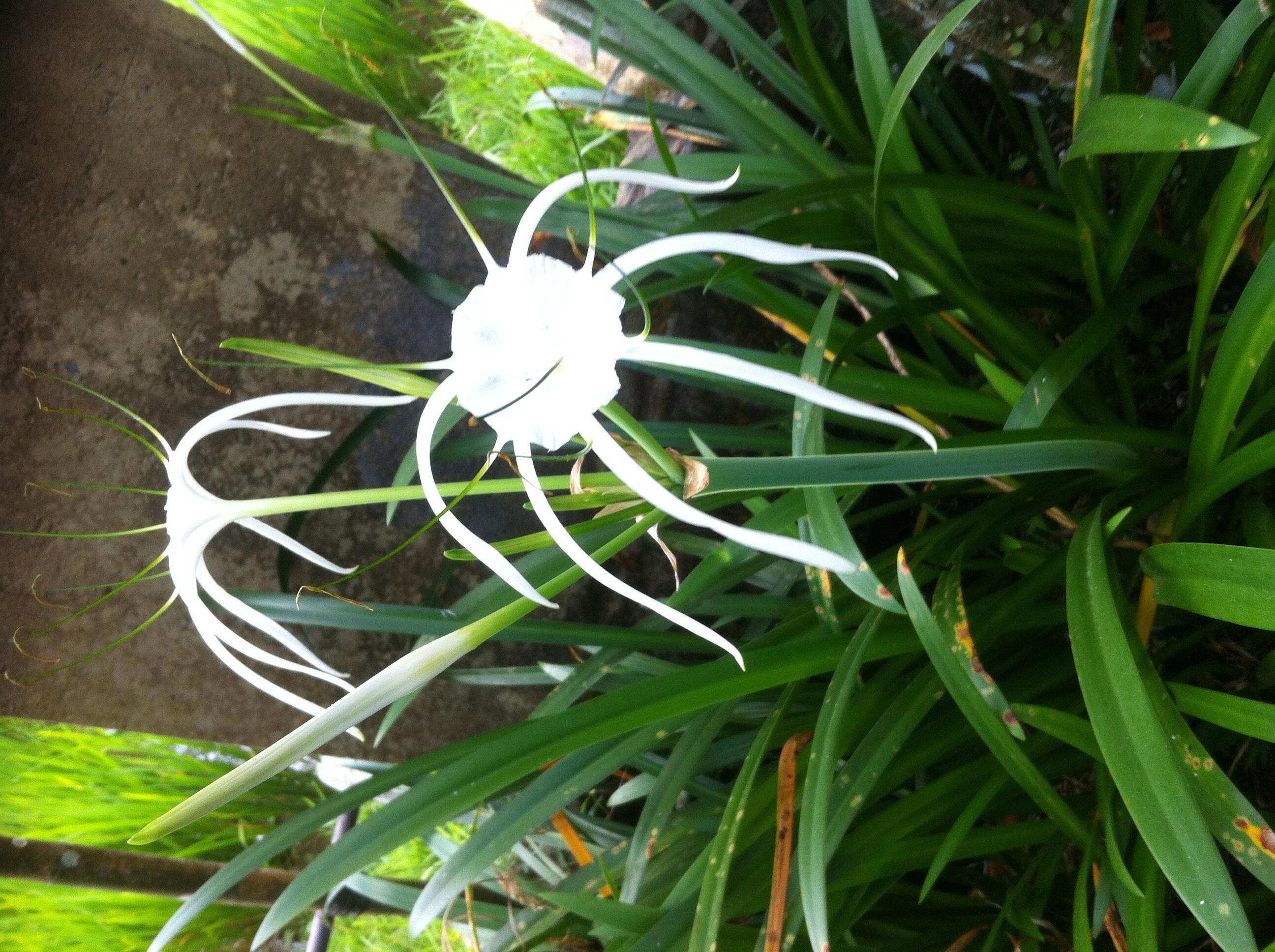 tropical gardens small spaces garden design