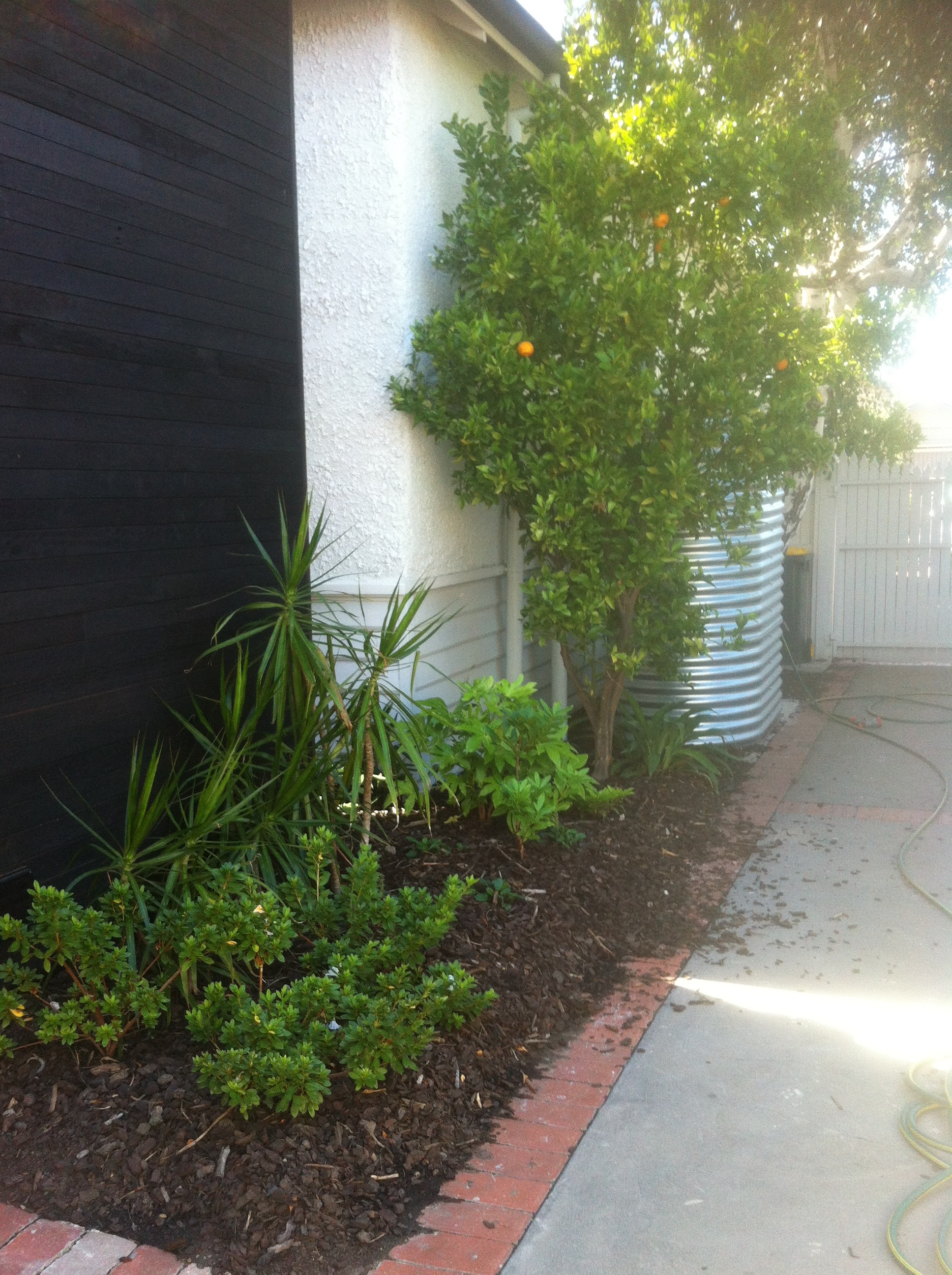 Rainforest in Coburg - Small Spaces Garden Design