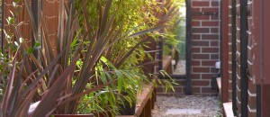 Sideway Garden | Small Spaces Garden Design, Coburg VIC