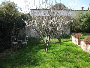 Fruit Trees in back garden before work started